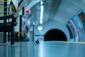 Sam Rowley's photograph Station Squabble, featuring a pair of mice fighting over a scrap of food at a London tube station, was crowned winner of the wildlife photographer of the year: Lumix people's choice award.