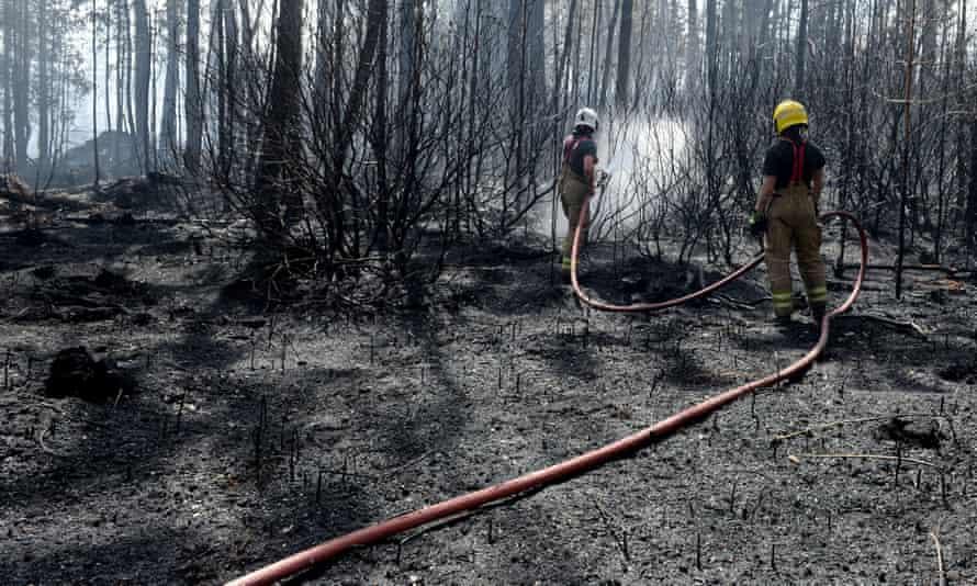 آتش نشانان در جنگل Wareham در آتش شعله ور می شوند