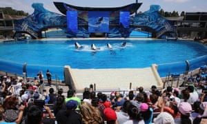 An audience watches a killer whale performance at SeaWorld's San Diego theme park, in the US.