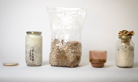 What's cooking: the mycelium-growing elements