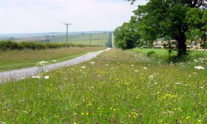 Managing road verges with the 'cut and collect' method can save money for councils.