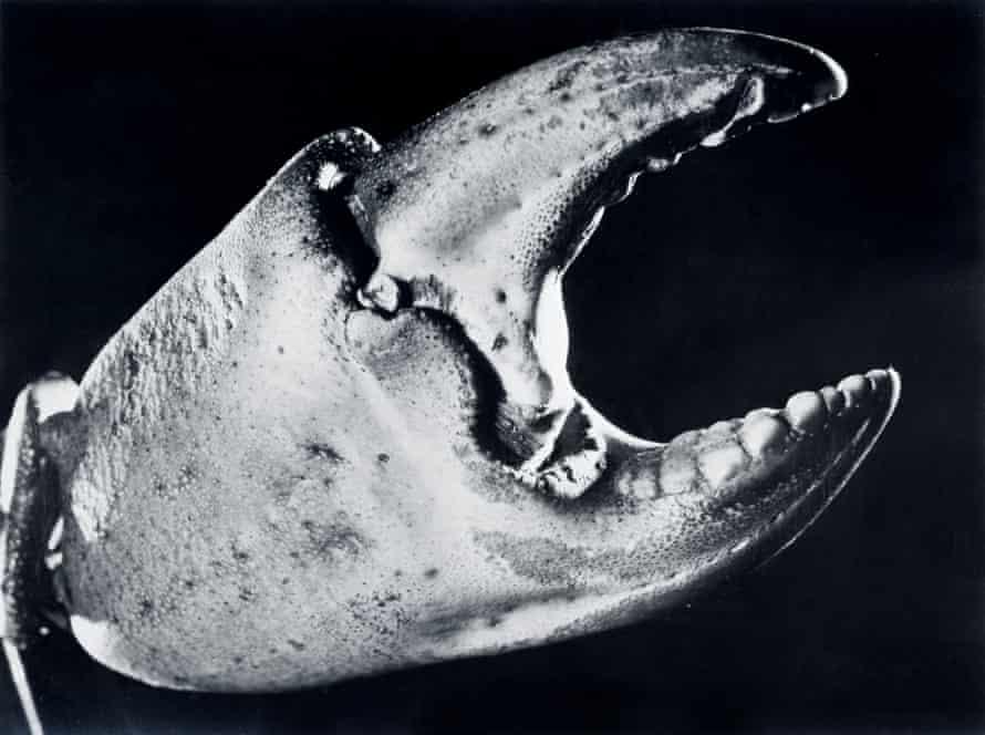 Surreal sea … Crab Claw, 1928.