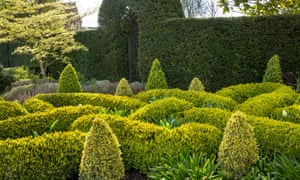 The knot garden with yew hedge.