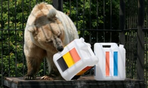 A bear predicts a World Cup result