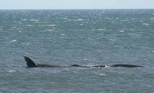 Newbiggin-by-the-Sea, UK A 40ft sperm whale is spotted off the coast of Newbiggin-by-the-Sea in Northumberland