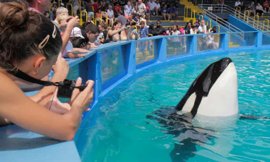 An audience at the Miami Seaquarium watches Lolita, the orca also known as Sk'aliCh'elh-tenaut, in 2010.