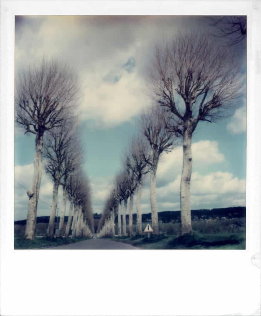 Winter trees, undated.