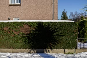 The shadow of a tropical palm looms over a leylandii hedge in Craigleith.
