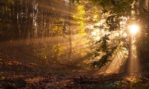 bright yellow early morning sunbeams shining through trees