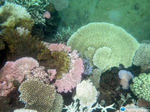 Bleached coral on Mission Beach Reefs