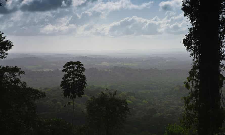The Amazon rainforest in Amapá state, Brazil.