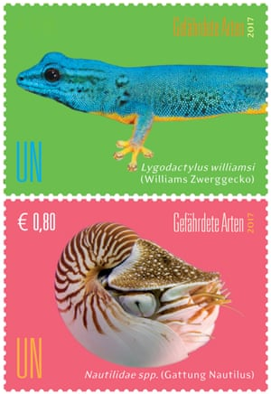 Turquoise dwarf gecko and Nautilus