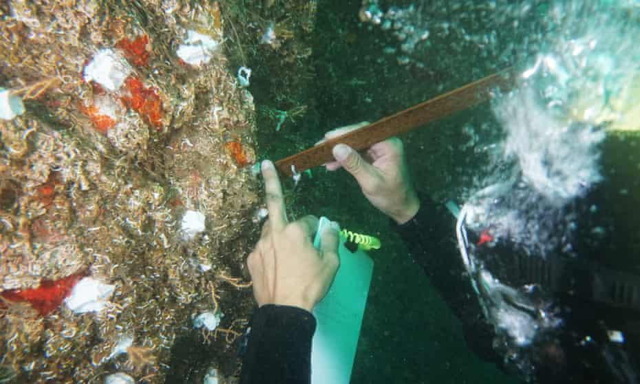 Coral transplantation in Turkey.