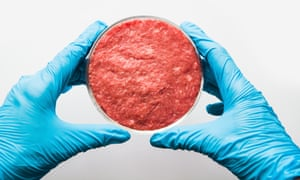 Laboratory studies of artificial meat. Minced meat in Petri dish. View from above<br>Laboratory studies of artificial meat. Minced meat in Petri dish under the supervision of a scientist. View from above. Chemical experiment.