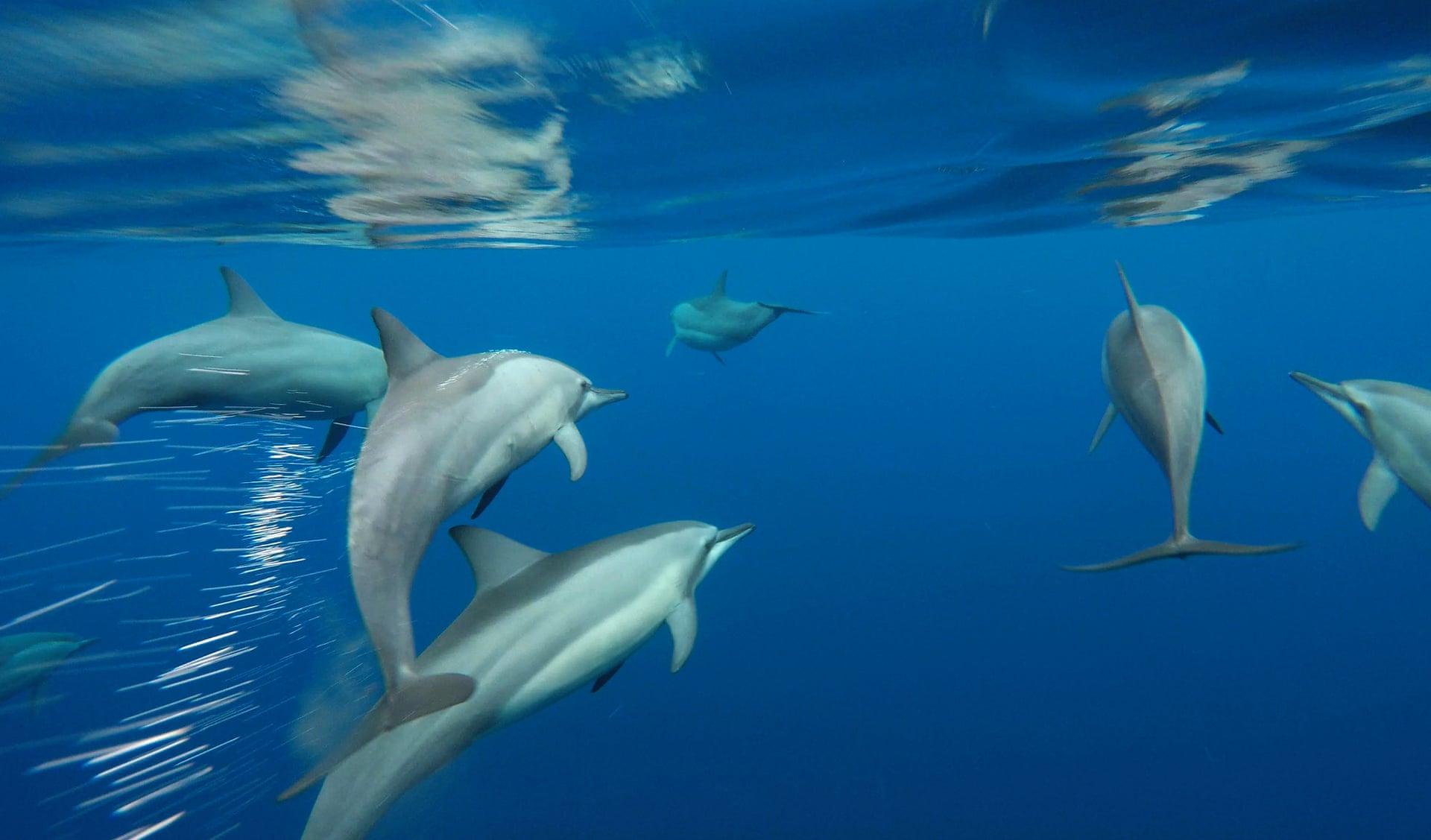 Source: Photograph: Paul Hilton/Conservation International