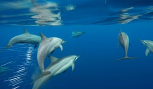 On Conservation International's advice, the Timor-Leste government added 19 species to the marine protected species list, making it illegal to capture these species.