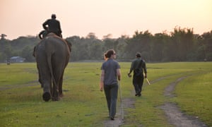 A sunset stroll with elephants in Nepal's Chitwan national park.
