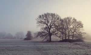 Oak trees in winter when, for some, a 'creeping despondency' sets in