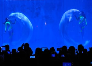 <strong>Harbin, China</strong><br>White whales and their trainers present a show at Harbin Pole Aquarium.