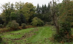 Damage caused by wild boar to the verges near Speech House in the Forest of Dean.