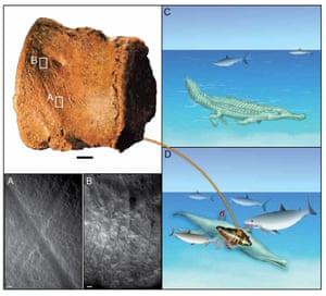 Reconstruction of sharks feeding on a dyrosaurid crocodilyform.
