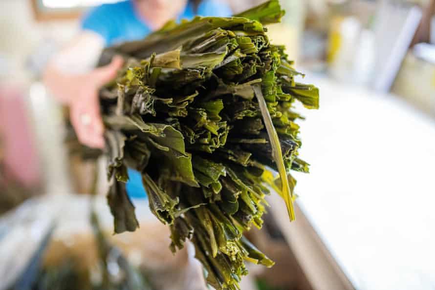Dried kelp at a seaweed farm in Bamfield, British Columbia