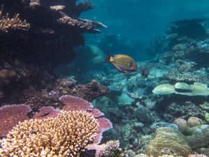 Can You Spot Dead Coral In Pictures Environment The