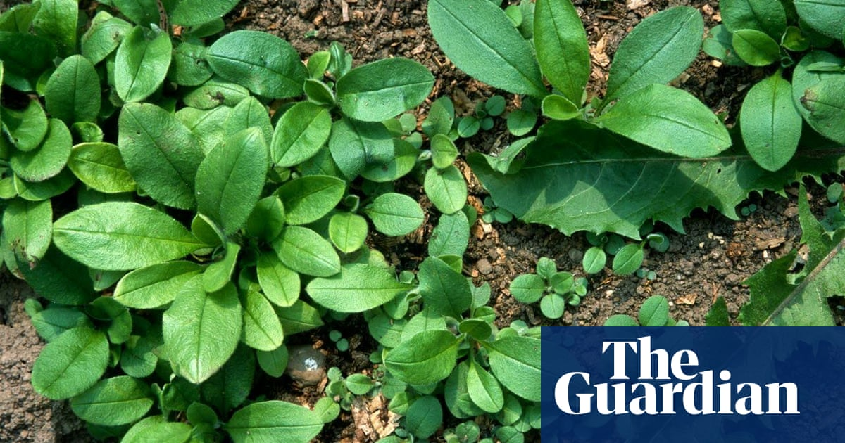 How Weeds Heal Bare Soil John Walker Life And Style The Guardian