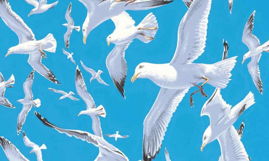 gulls in flight by neil gower