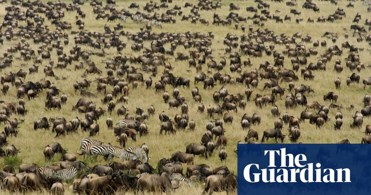 Wildebeest, bustards and bongos: Kenya begins first national census of wildlife