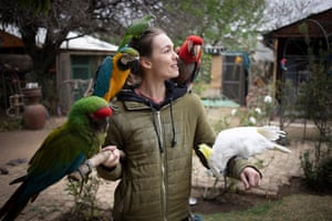 Johannesburg, South Africa. Volunteer Anre Bouguenon cares for some of the 300 parrots at the Brainy Birds Parrot rescue and rehabilitation centre.