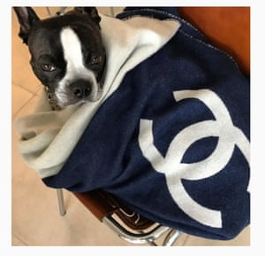 The oppo: Ru, the Boston Terrier owned by Vogue editor Edward Enninful and Alec Maxwell (@ruenninful), showing off in a Chanel dog blanket.