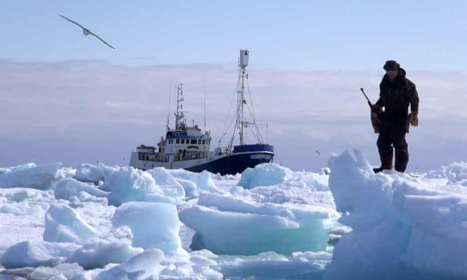 Sure shot: a still from the documentary Sealers: One Last Hunt. Captain Kvernmo pilots the Havsel through the ice from his tiny cockpit at the top of the mast