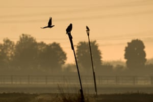 Eagles and hawks sit on perches in the morning fog in Pulheim, western Germany