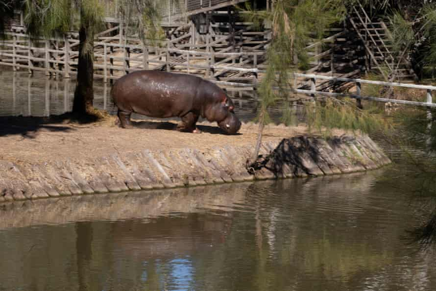 The Hippo enclosure at the Western Plains zoo.