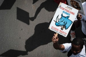 Placards at the annual Global March for Elephants, Rhinos and Lions in Nairobi, Kenya, on 7 October