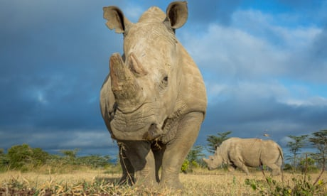 Biologists think 50% of species will be facing extinction by the end of the century