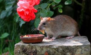 Nourrir des animaux dans un jardin est une invitation aux rongeurs.