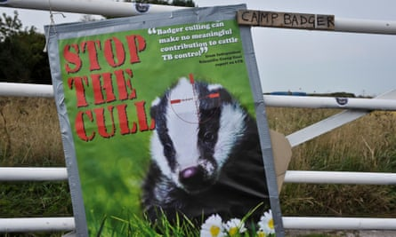 Stop the badger cull banner