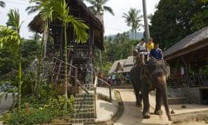 British tourist killed by elephant on trek in Thailand