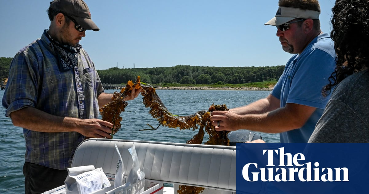 'It's a miracle crop': the pioneers pushing the powers of seaweed