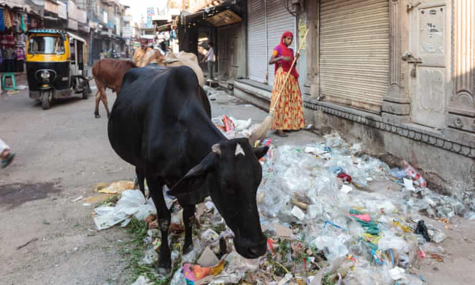 Typical narrow street with a holy cow walking in the blue city of Jodhpur, Rajasthan, India