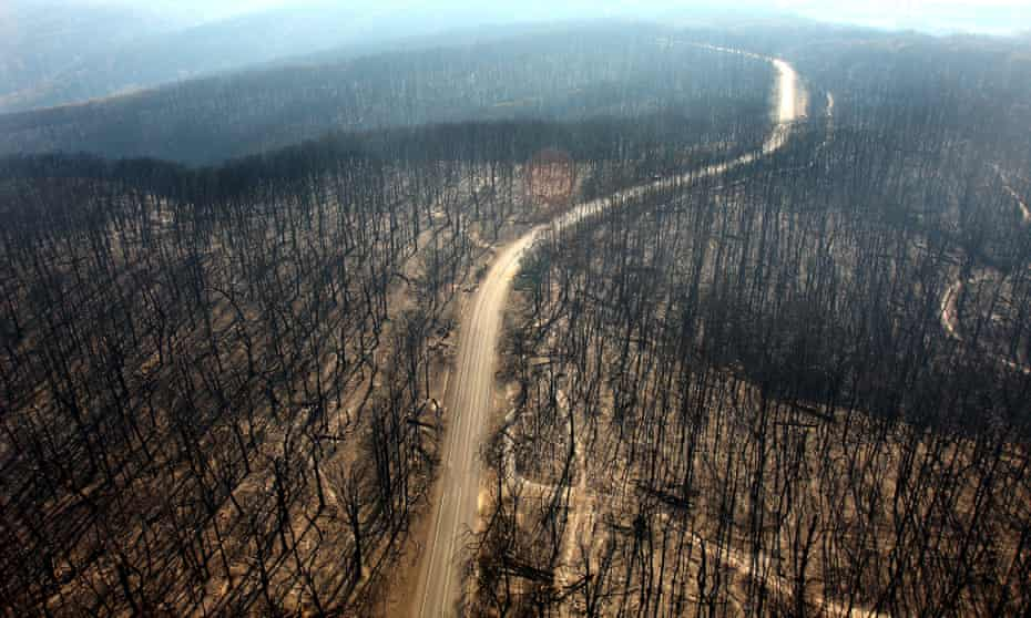 A burnt-out forest in Kinglake after the Black Saturday fires of 2009.