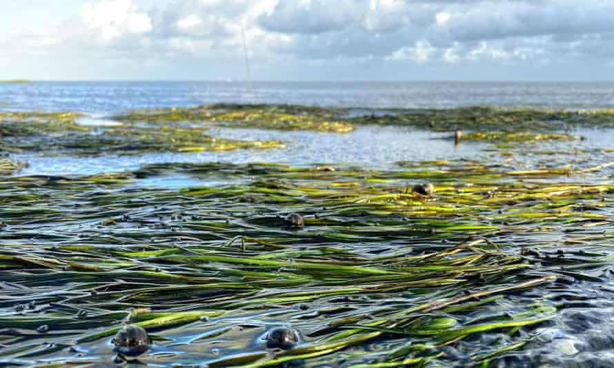 Dutch beer firm Lowlander says it adds a plant to its seagrass meadow (above) for every can it sells .
