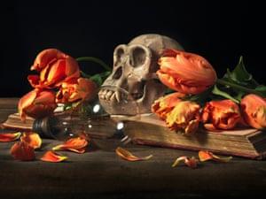 Chimpanzee skull and tulips
