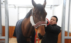 The horse given by Macron to Xi Jinping on the French president's visit to China