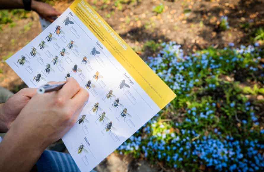 The national bee survey in Netherlands.
