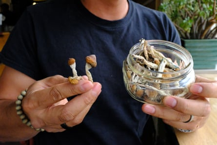 Picture of shrooms in Denver, undated, for Dan Hernandez story.