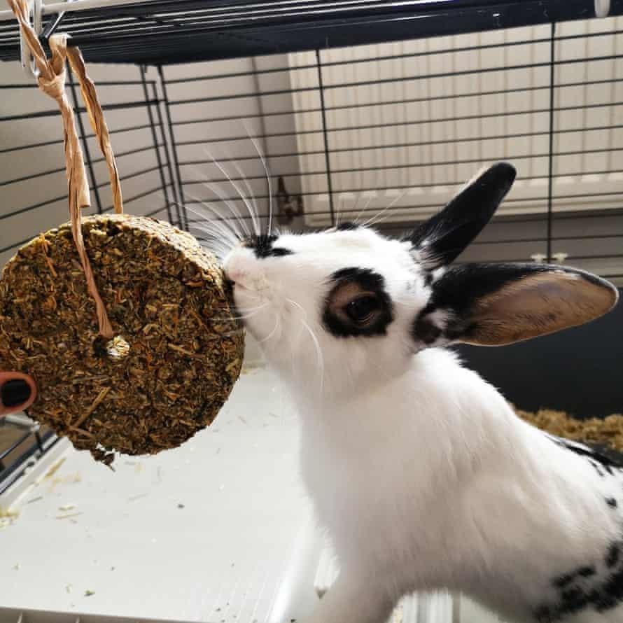 Faleena's rabbit