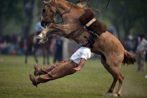 A gaucho falls from a colt on 'tradition day' at the rodeo in San Antonio de Areco, Argentina